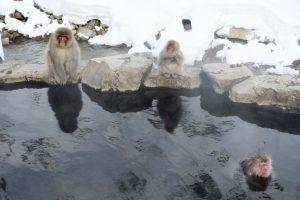 温泉 サル